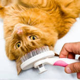 cat-care_cat-grooming_body1-right.jpg